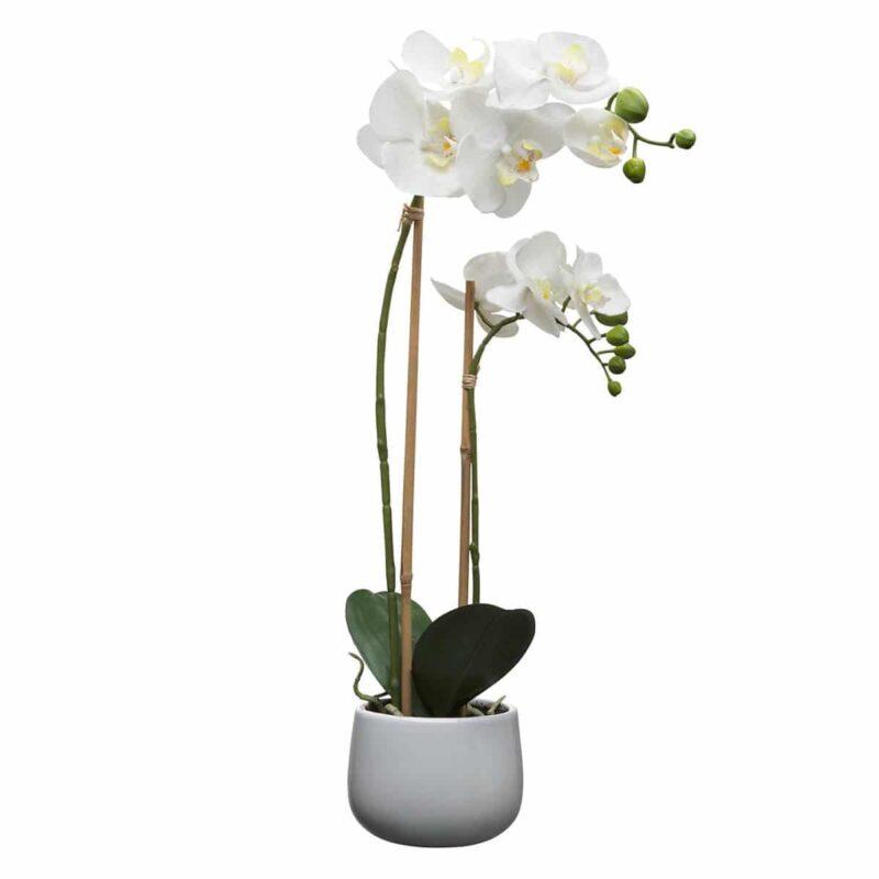 Orchid phalaenopsis-Ορχιδέα 55-60cm (χρώμα Λευκό)