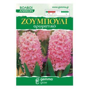 Ζουμπούλι ρόζ (Αρωματικό) 3511