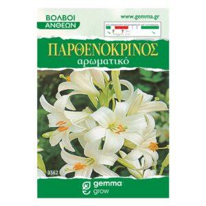 Lilium Longiflorum παρθενόκρινος (Αρωματικό) 3562