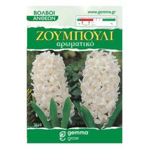 Ζουμπούλι λεύκο (Αρωματικό) 3510