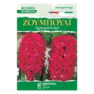 Ζουμπούλι κόκκινο (Αρωματικό) 3513